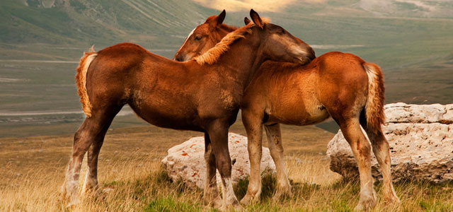 two foals loving each other