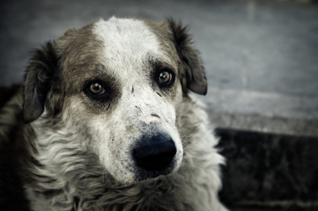 Sad dog iStock_000011589690Small