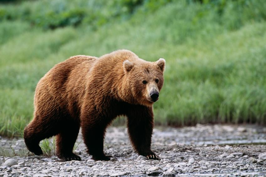 bear iStock_000012121603Small