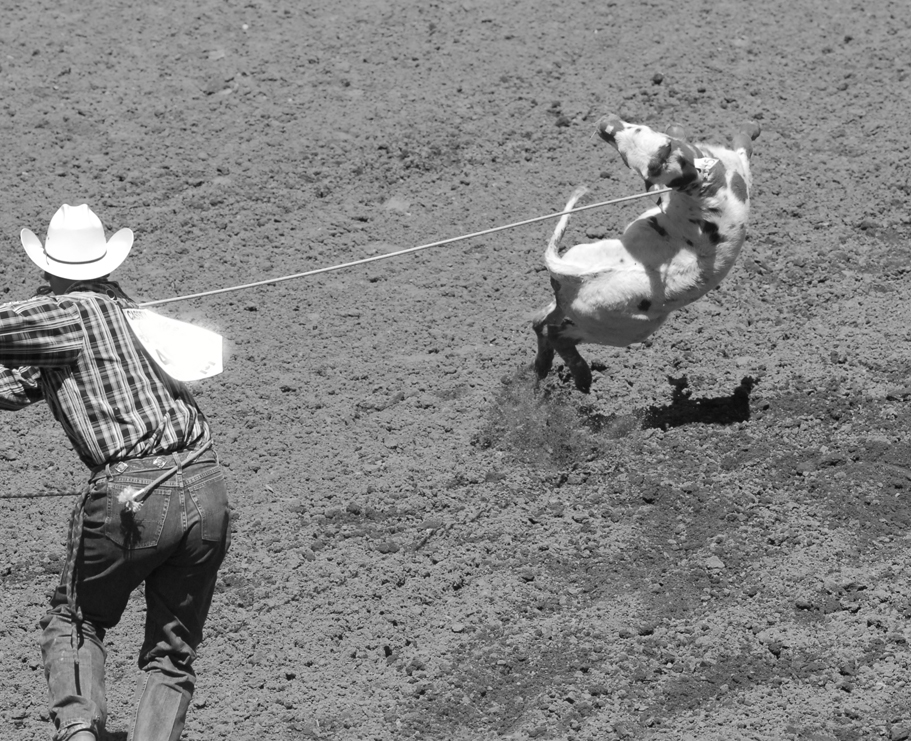 The Calgary Stampede - a spectacle of animal abuse - Vancouver