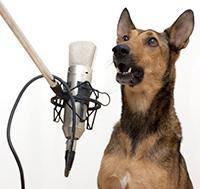 animal-voice