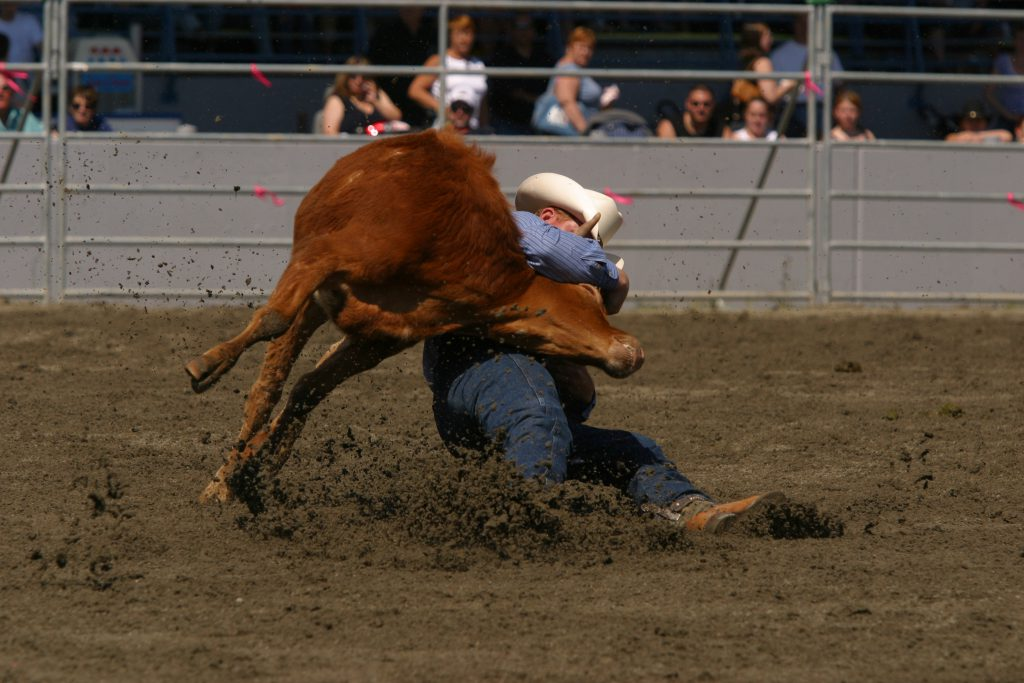 a steer is killed in competition