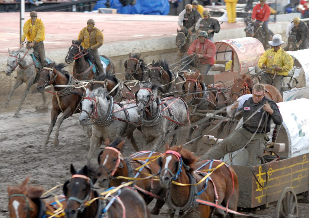 Rodeo Recap Calgary Stampede 2019 Vancouver Humane Society
